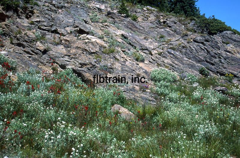 USA1992080988 - USA, Rollins Pass, Colorado, 8-1992