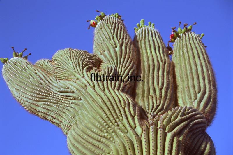 USA2004060115 - USA, Saguaro NP, Arizona, 6-2004