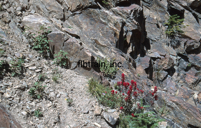 USA1992080989 - USA, Rollins Pass, Colorado, 8-1992