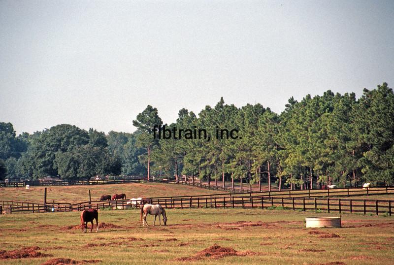 USA1987090004 - USA, Bayou Black, Louisiana, 9-1987