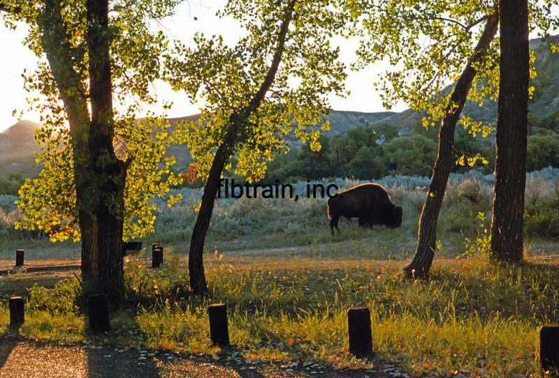 USA1974090062 - USA, Theodore Roodevelt NP, North Dakota, 9-1974