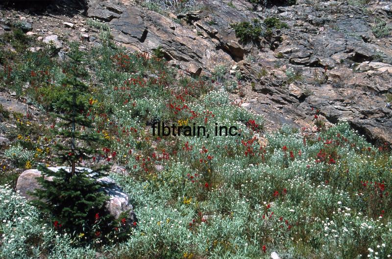 USA1992080987 - USA, Rollins Pass, Colorado, 8-1992