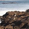 USA1982090123 - USA, Acadia NP, Maine, 9-1982
