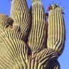 USA2004060101 - USA, Saguaro NP, Arizona, 6-2004