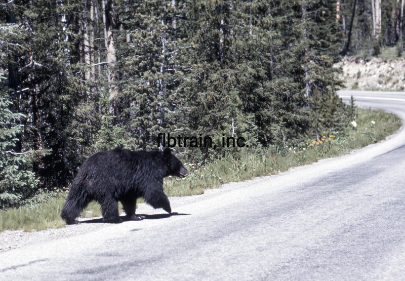USA1970070042 - USA, Yellowstone NP, Wyoming, 7-1970
