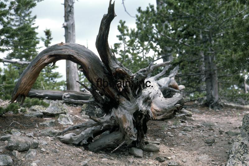 USA1976070160 - USA, Rocky Mountain NP, Colorado, 7-1976