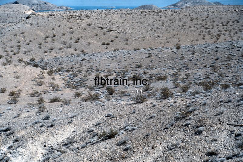 USA1984100013 - USA, Lake Mead NRA, Nevada, 10-1984