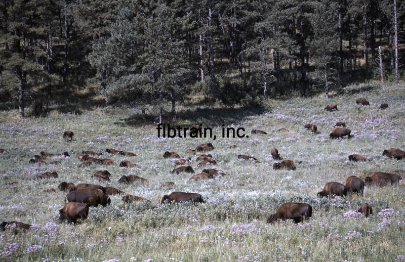 USA1999080001 - USA, Custer SP, South Dakota, 9-1999