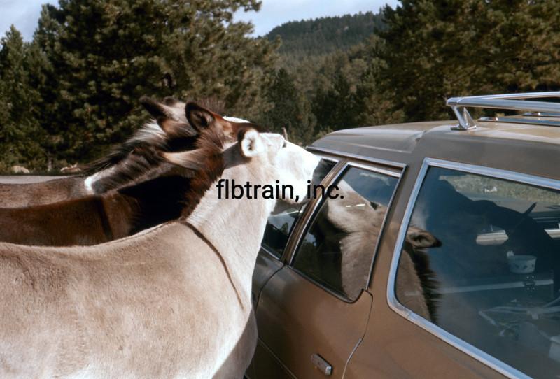 USA1974090012 - USA, Custer SP, South Dakota, 9-1974