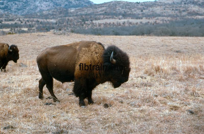 USA1970020007 - USA, Mount Scott, Oklahoma, 2-1970