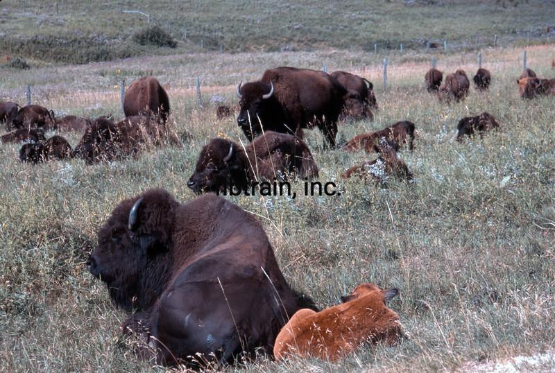USA1999080010 - USA, Custer SP, South Dakota, 8-1999