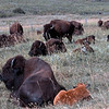 USA1999080010 - USA, Custer SP, South Dakota, 8-1999