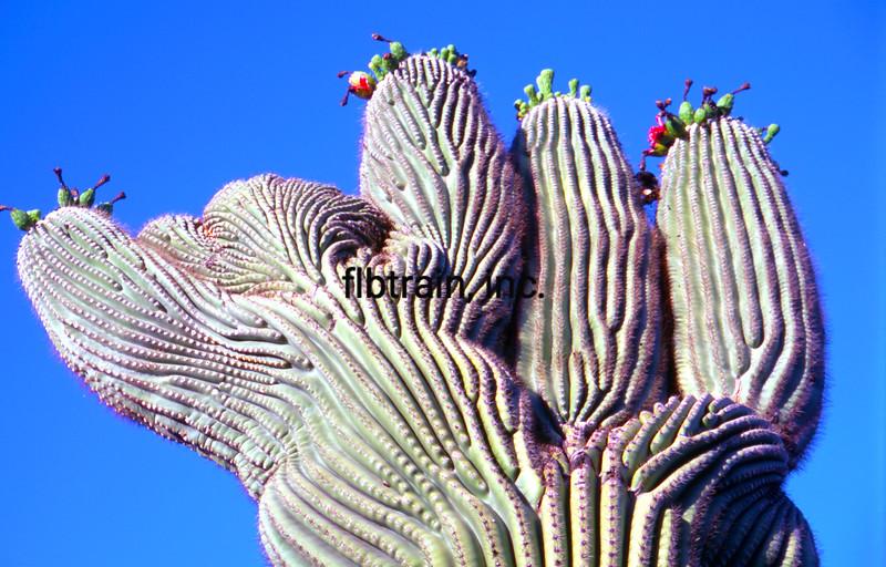 USA2004060113 - USA, Saguaro NP, Arizona, 6-2004