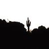 USA2004030001 - USA, Arizona, Florence Junction, 3-2004