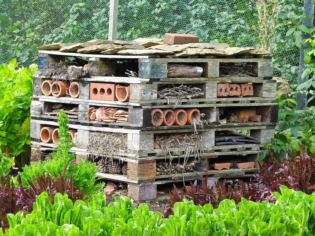 Vegetable Garden, Hidcote