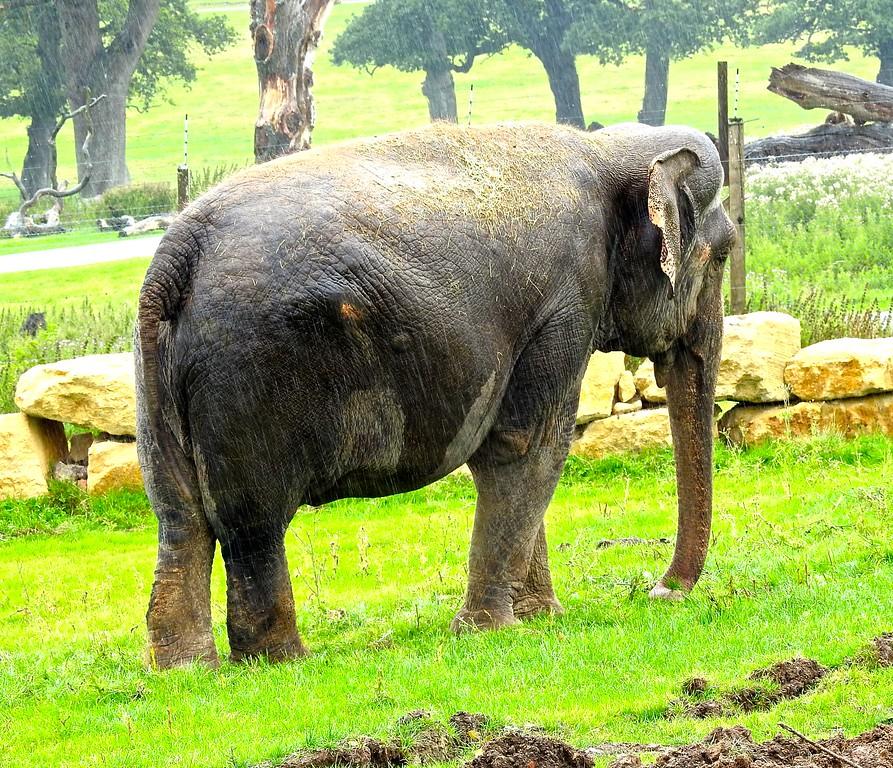 Longleat Elephant