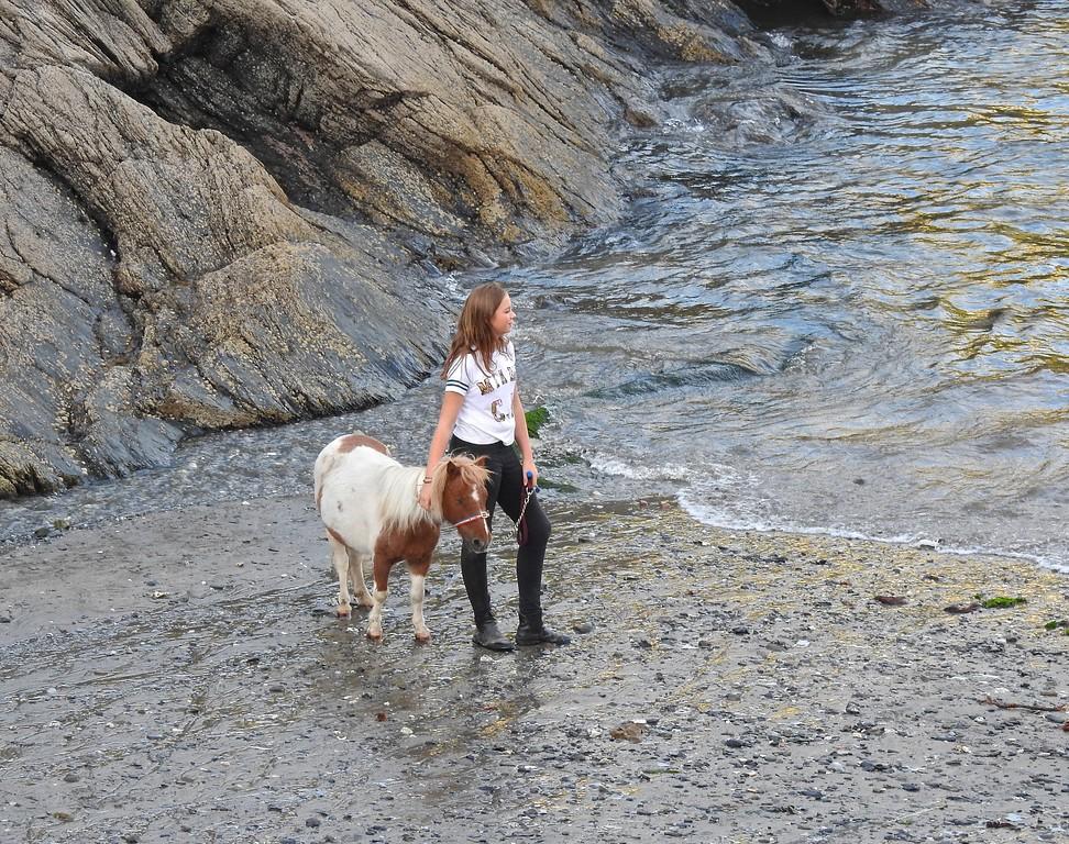 Portloe Pony