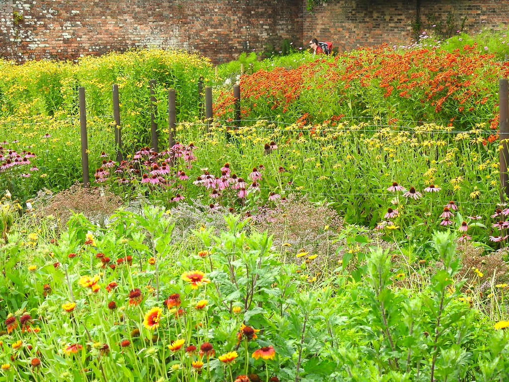 Walled Garden at The Lost Gardens of Heligan, Cornwall