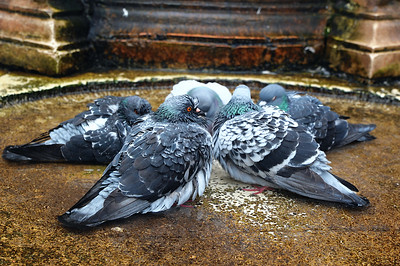 Who's in..... I'll raise you 5 euro...... lol!! Looks like a pigeon card game going on here.