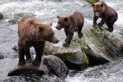 Young Mother with two cubs
