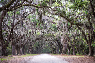 Live Oak Alley at Wormsloe Plantation in Savannah, Georgia