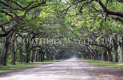 Live Oak Alley at Wormsloe Plantation in Savannah, Georgia