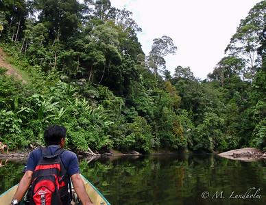 Temburong Rainforest