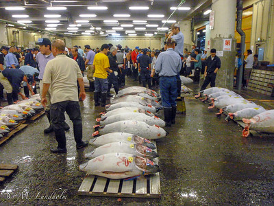 Tjikiji Fish Market Tuna Auction