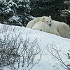 Mother and cub resting
