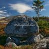 An erratic rock in Peggy Cove Nature Preserve