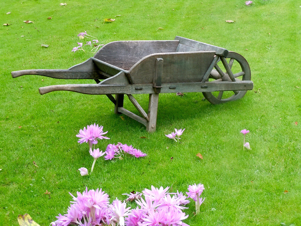 Wheelbarrow and Cyclamen
