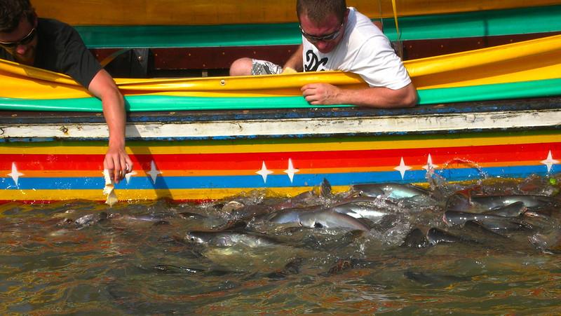 Feeding Frenzy, Chao Phraya River