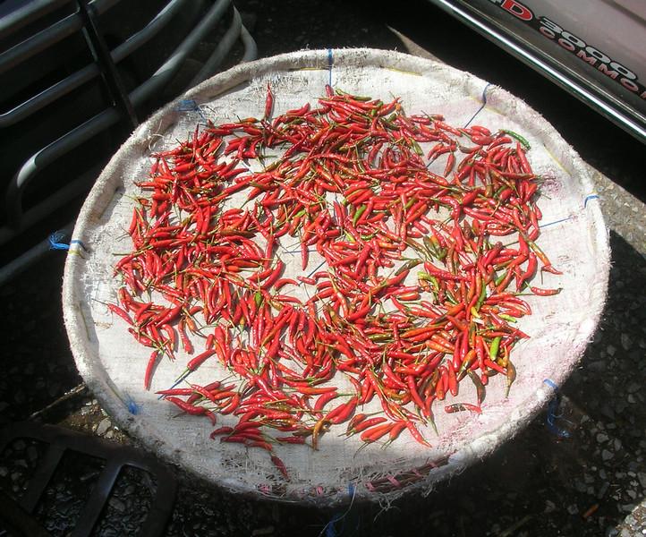 Chilis Drying, Bangkok Flower Market