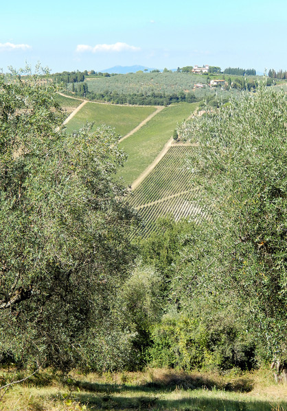 Olives and Vines