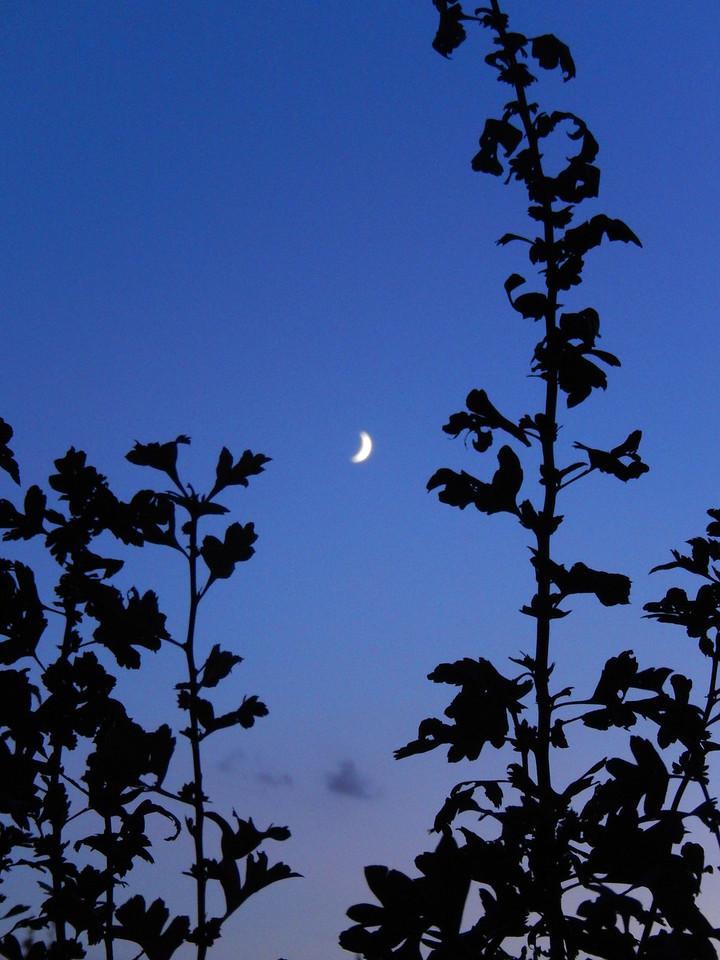 Tuscan Moon
