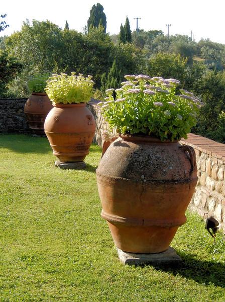 Tuscan Loveliness