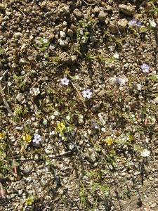 more very tiny flowers