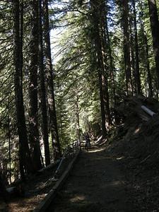 gorgeous bike trail around Diamond Lake