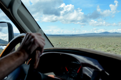 pronghorns out the windshield