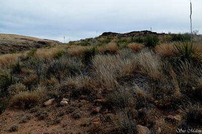 lush grasses on the north slope at Painted Gap