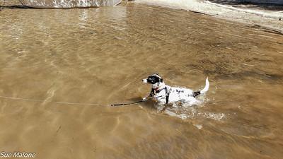 Mattie swimming toward Mo
