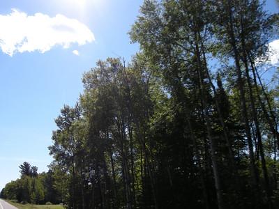 hardwood forest in Minnesota along Highway 2