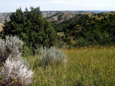 sage and juniper in North Dakota