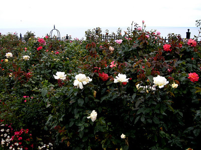 the rose garden along the Lakewalk in Duluth