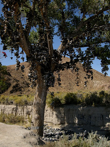 the shoe tree on Highway 50