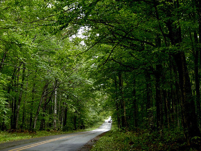 hardwood forest on the road to Pictured Rocks