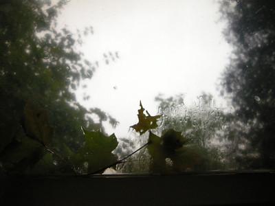 rainy morning view through the shower skylight