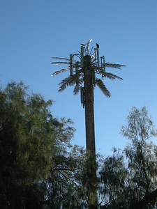 these fake palms are everywhere.  Do you  suppose we aren't supposed to know they are cell towers?