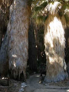 native palms were amazing