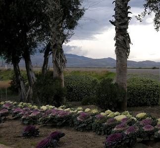 gardens at Harris Ranch
